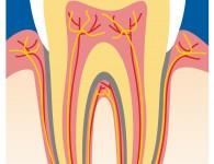 zahn implantat ganzheitlich